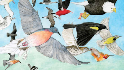 The Most Extensive Report Ever on American Birds Says There's Cause for Concern