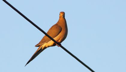Birds Make Landing on a Wire Look Easy. Now Try It With a Drone.