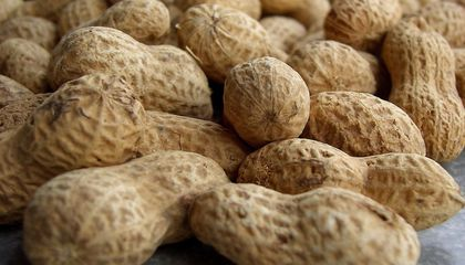 Promising Peanut Allergy Treatment Could Become Available in the Near Future