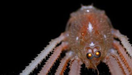 How Do Crabs See Food on the Ocean Floor? UV Vision