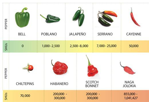 8e3185f7191b What s So Hot About Chili Peppers