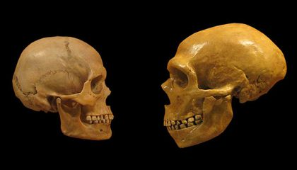 Image result for neanderthal fossils