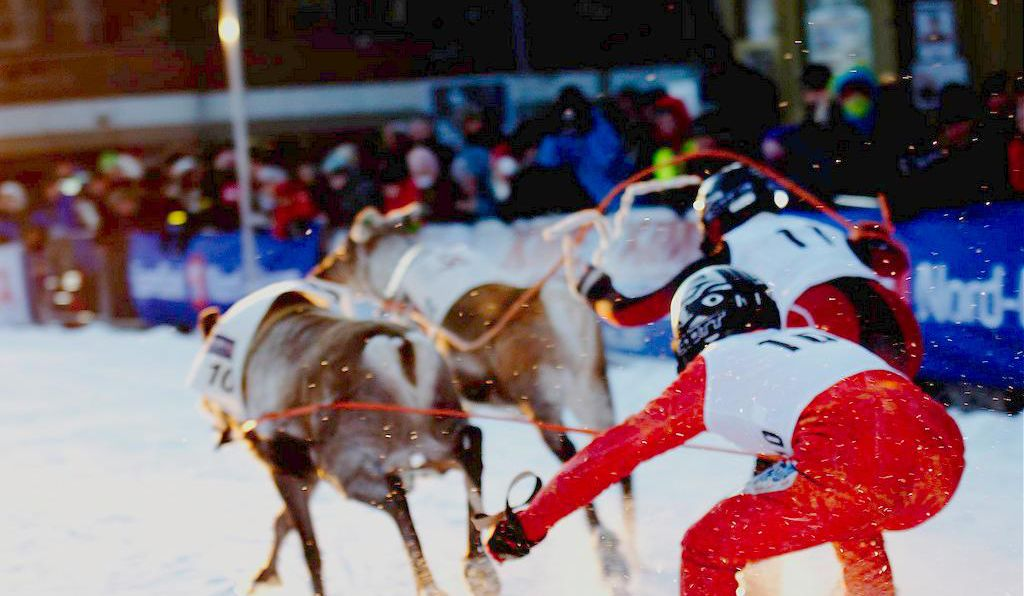 Reindeer are the vehicle of choice at the World Reindeer Racing Championships.