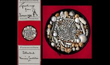 The Nerdiest Christmas Cards Ever May Be These Microscope Slides Composed of Shells