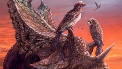 This Dino-Era Bird Was as Advanced as Modern Species. So Why Did It Disappear?