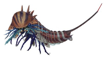 This Fierce 508-Million-Year-Old Relative of Scorpions Had Five Jaws and Body Armor