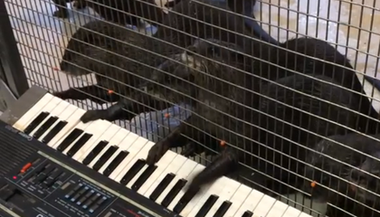 You Otter Believe These Zoo Animals Can Play the Piano, the Harmonica and the Xylophone
