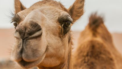 Why This New Technology Inspired by Camel Fur Is Super Cool