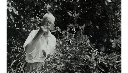 This Swashbuckling Botanist Changed America's Landscapes