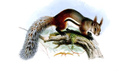 """Mysterious """"Vampire Squirrel"""" Finally Caught on Camera"""