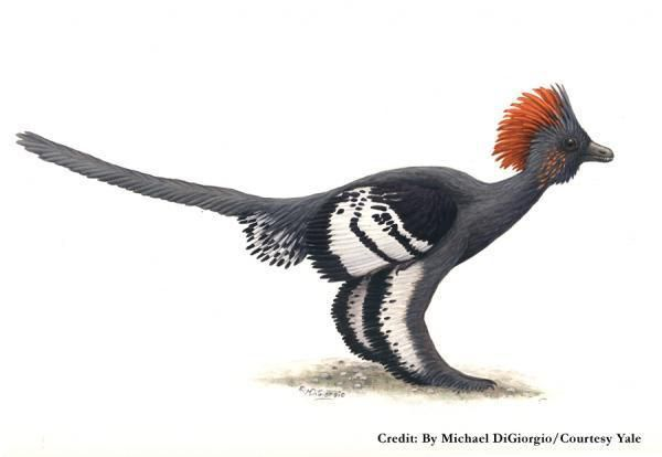 20110520083205Anchiornis-colors.jpg