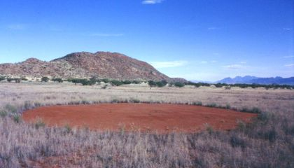 """Mysterious """"Fairy"""" Circles Share Qualities With Human Skin"""