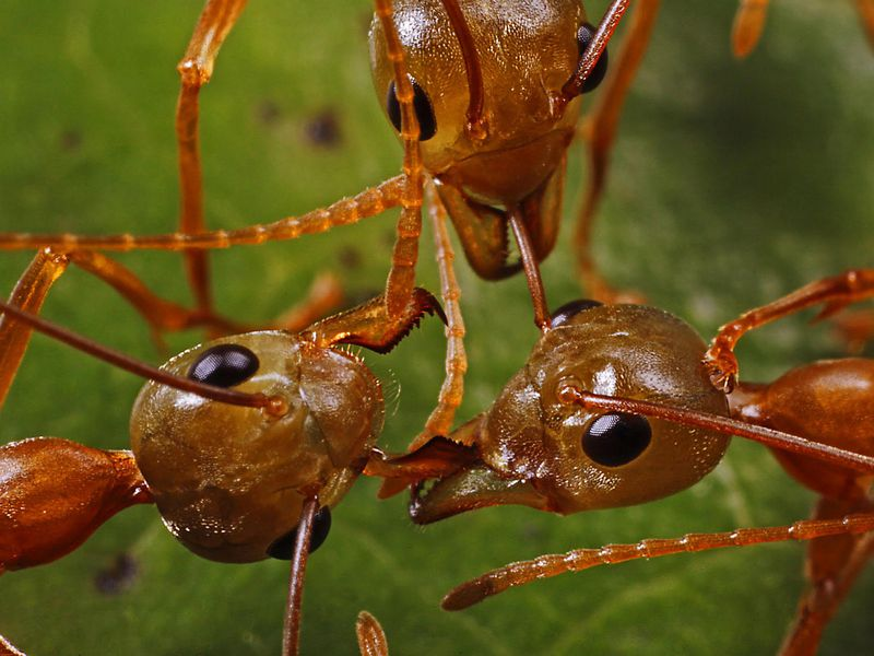 When It Comes to Waging War, Ants and Humans Have a Lot in
