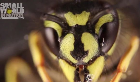 Preview thumbnail for video'A German Wasp - Jan Rosenboom