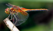 Dragonflies Are an Odd Combination of Beautiful Things