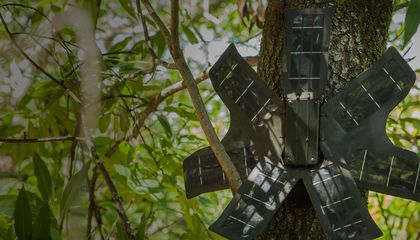 How Solar-Powered Recycled Smartphones Could Save the Rainforest