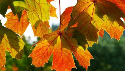 Why Fall Color Has Been So Meh in Parts of the U.S. This Year
