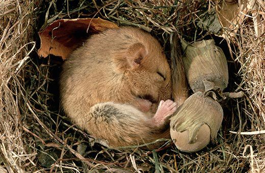 Nestling in burrows, tree holes or caves conserves energy and may buffer these species against environmental change