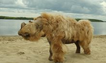 Climate Change, Not Hunting, May Have Doomed the Woolly Rhinoceros