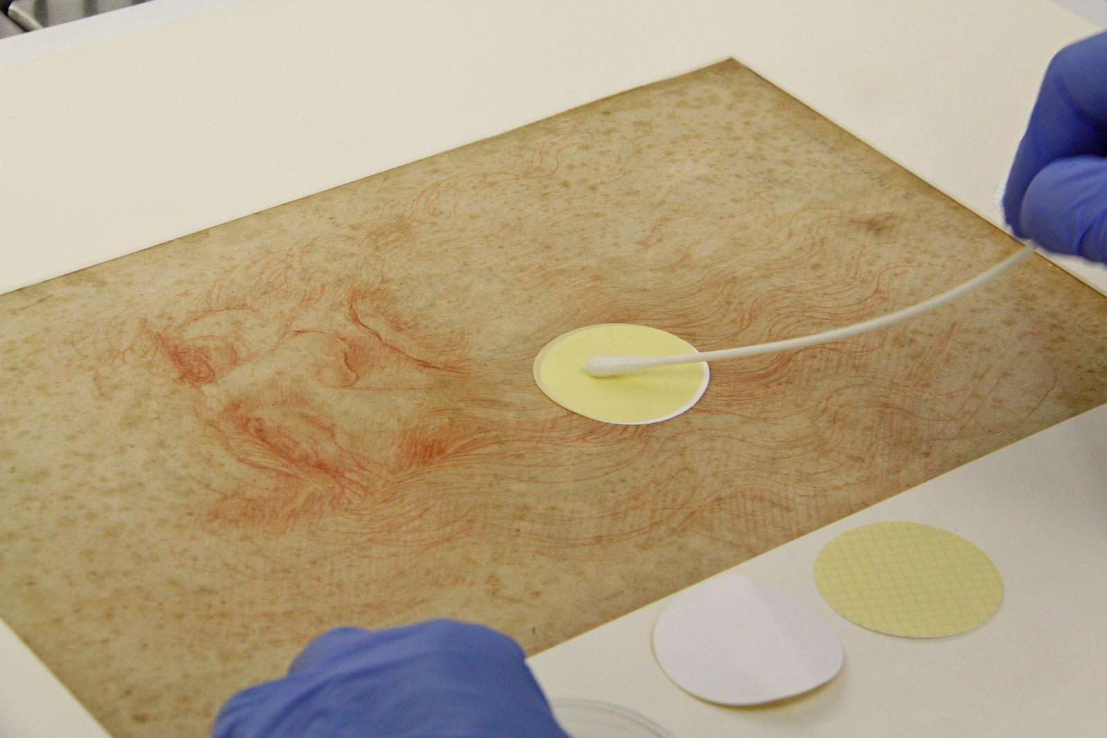 Hidden Microbes and Fungi Found on the Surface of Leonardo da Vinci Drawings