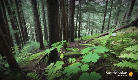 Preview thumbnail for video'Forest Flight Down