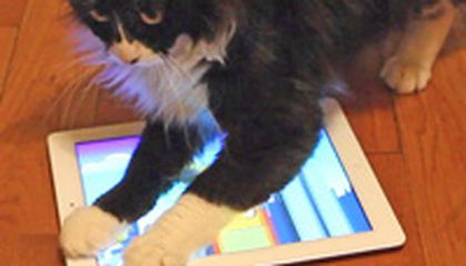 Image: Got a cat? Theres an app for that