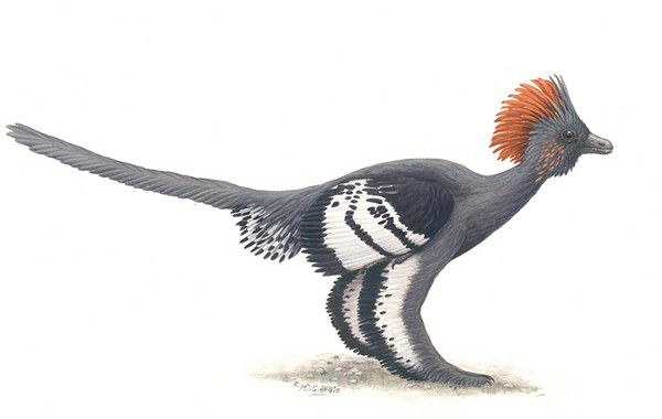 20110520083255anchiornis-colors.jpg