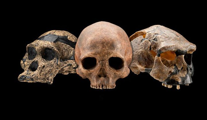 Some of the most exciting discoveries in human evolution happened in the last decade. (Human Origins Program, Smithsonian Institution)