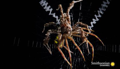Yes, Spiders Eat Spiders