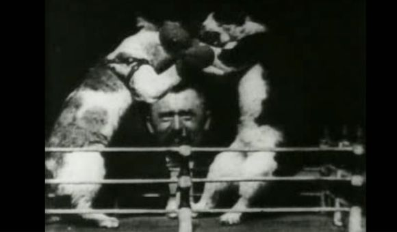 Preview thumbnail for video'Thomas Edison's Boxing Cats