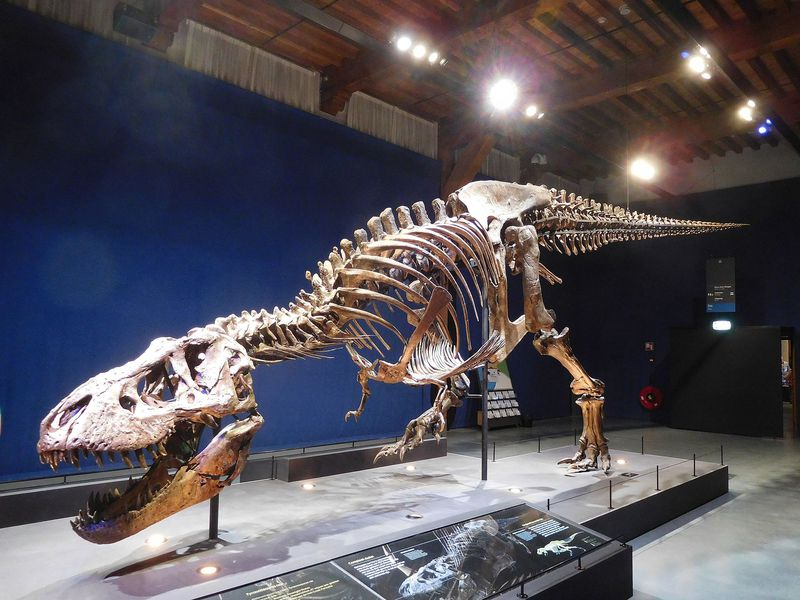 The photo shows a T. rex specimen named