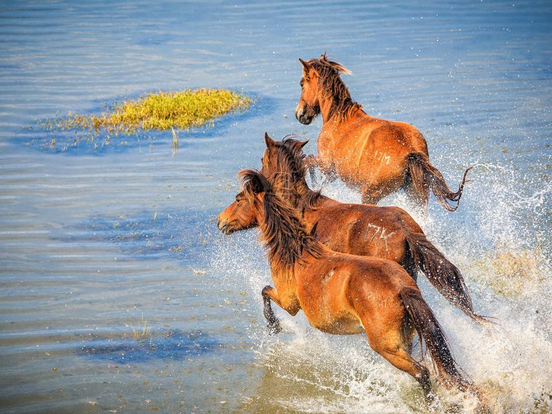 The Best Places to See Wild Horses in North America | Travel
