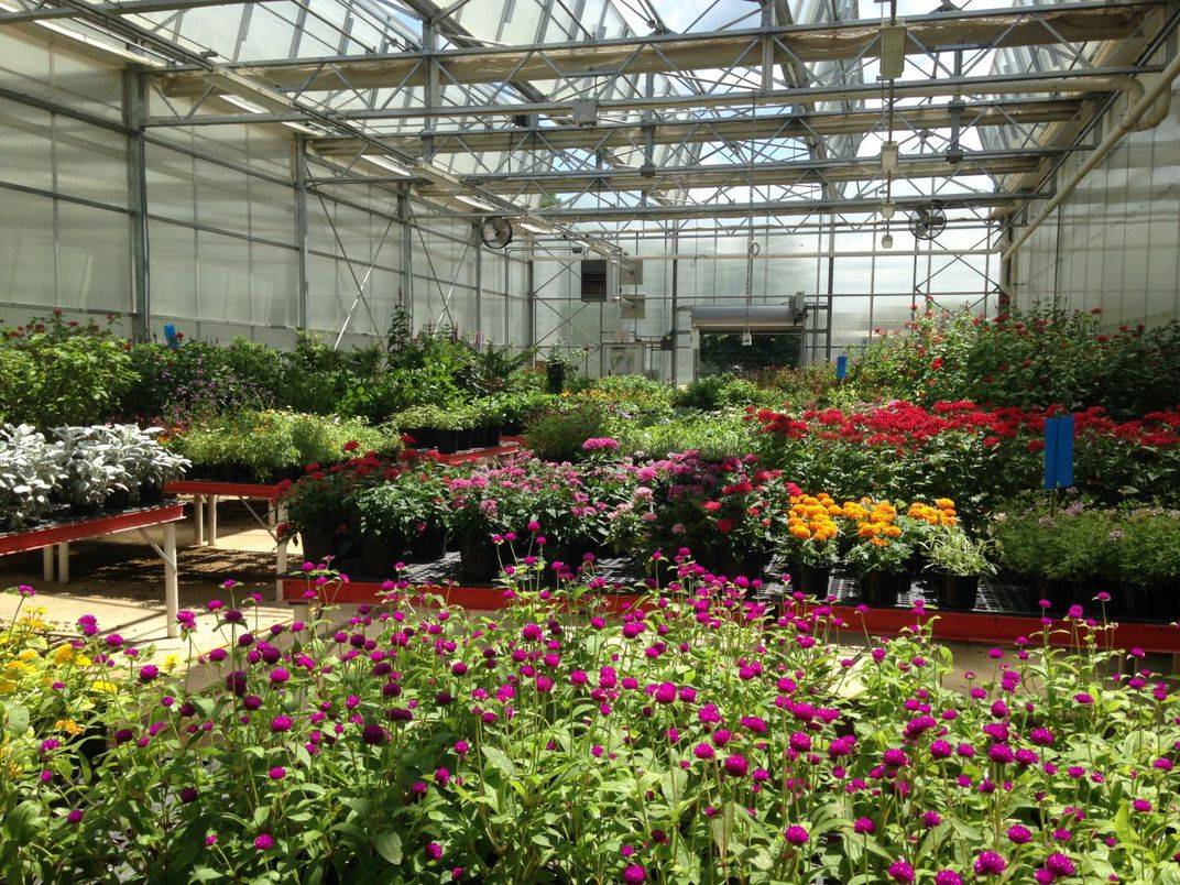 The plants for the Butterfly Pavilion get their start at the Smithsonian Greenhouses.