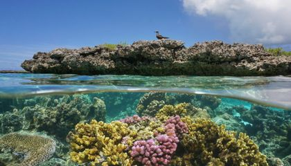 Coral Reefs Need Fewer Rats and More Bird Poo