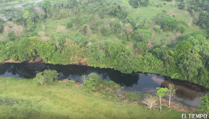 Oil Spill in Colombia Kills 2,400 Animals