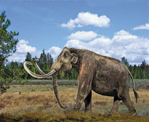 Mammoths and Mastodons: All American Monsters | Science