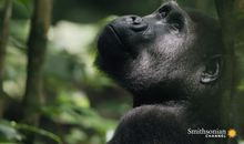 How Ecotourism Can Save Both Gabon's Forests and Its Gorillas