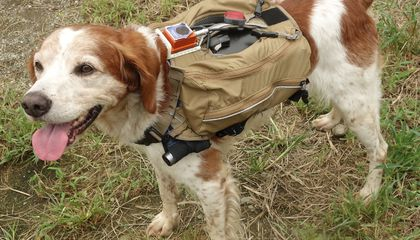 This Remote Control Vest Trains Rescue Dogs Using Flashlights