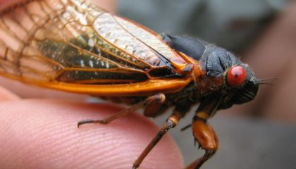 Leaproaches, Mutant Butterflies and Other Insect News That the 17-Year Cicadas Missed