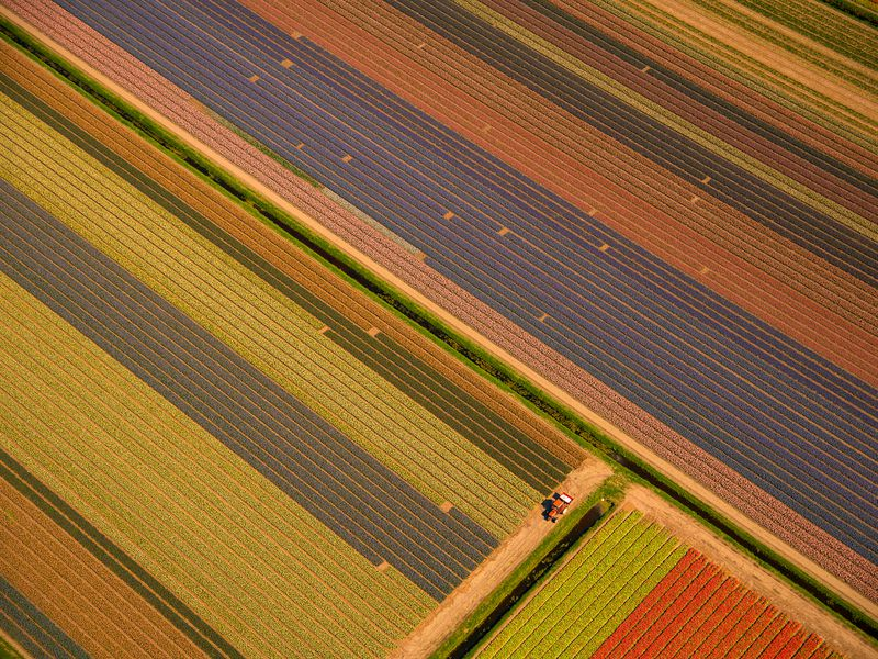 A farmer's tractor in his tulip fields. Last year the Netherlands produced 2 billion tulips, 77% of the world supply of bulbs. Photographed April 20, 2018 in perfect Spring weather from a small plane.
