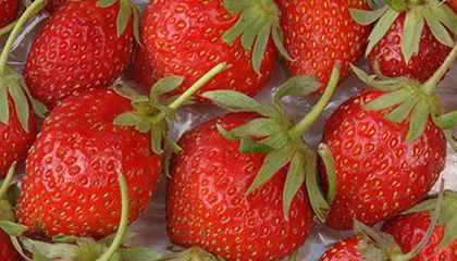 """The Strawberry with """"Wicked Wiles"""""""