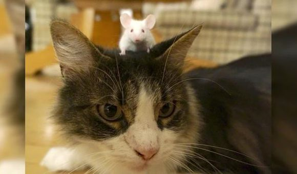 Preview thumbnail for video'SmartNews: Why Are These Mice Unafraid of Cats?