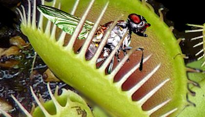 On Alien Worlds, Some of the Plants Might Want to Eat You (If You're a Bug)