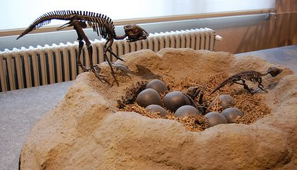 Scientists Just Found the Teeny Bones of Fossilized, Embryonic Dinosaurs