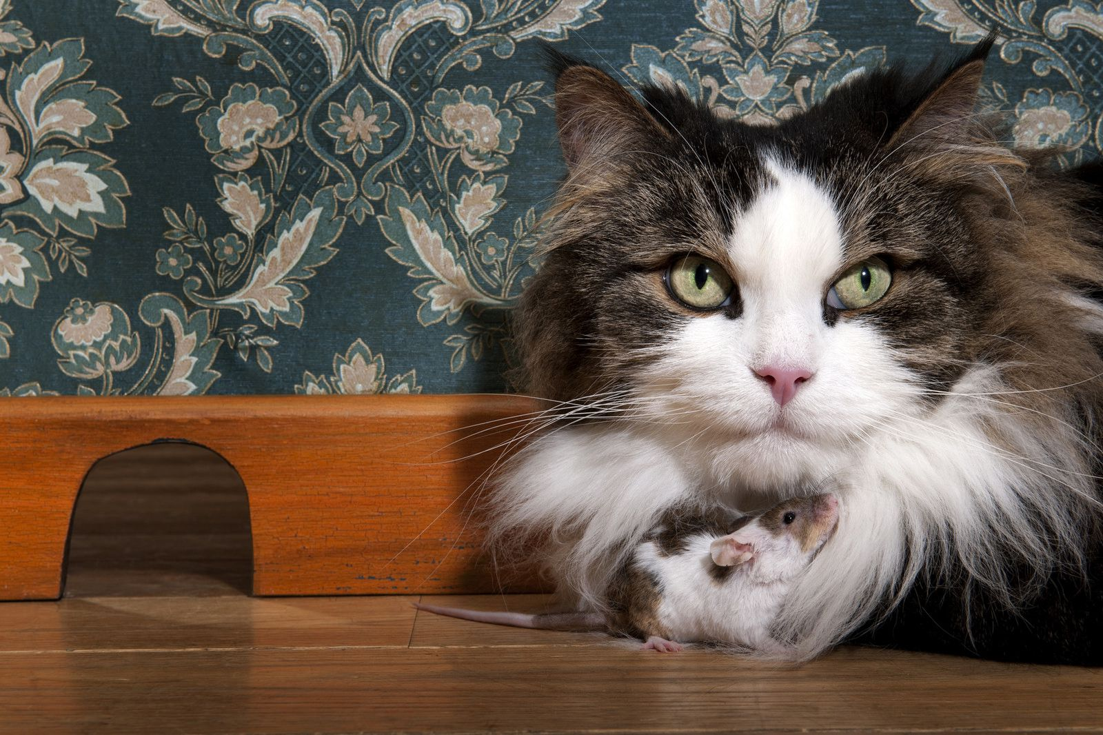Cats Are Surprisingly Bad At Killing Rats Smart News