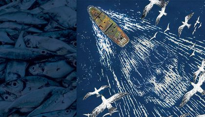 The Hunt for the Modern-Day Pirates Who Steal Millions of Tons of Fish From the Seas