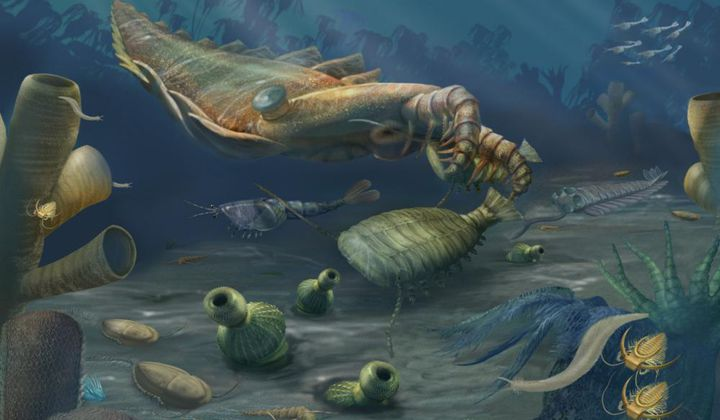 Fossil Treasure Trove of Ancient Animals Unearthed