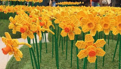 Thousands of Lego Daffodils Are Blooming in Britain