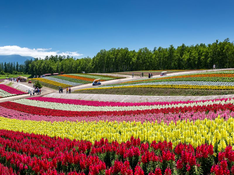 12 Mesmerizing Places To Watch Flowers Bloom Travel Smithsonian
