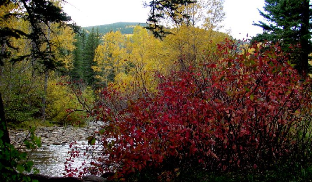 Fall colors in Taos, New Mexico.